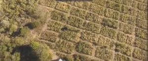 desertificação_restauração_florestal