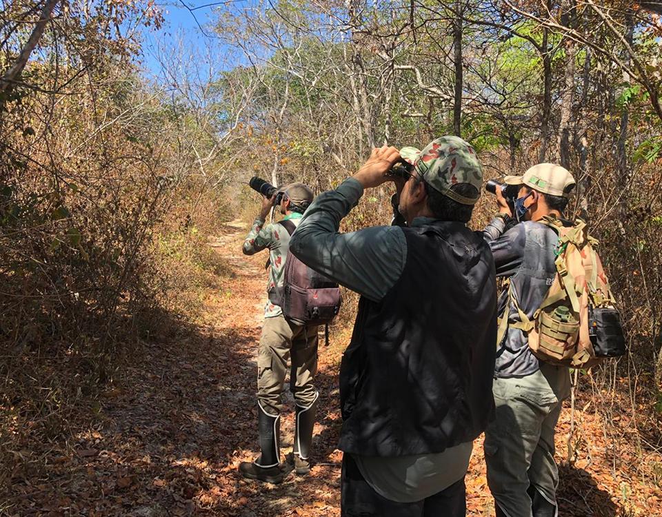 Em live no Youtube, Associação Caatinga lança Guia de Aves da Reserva Natural Serra das Almas