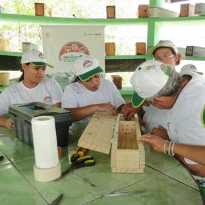 no-clima-da-caatinga-live-abelha-jandaíra-nativa