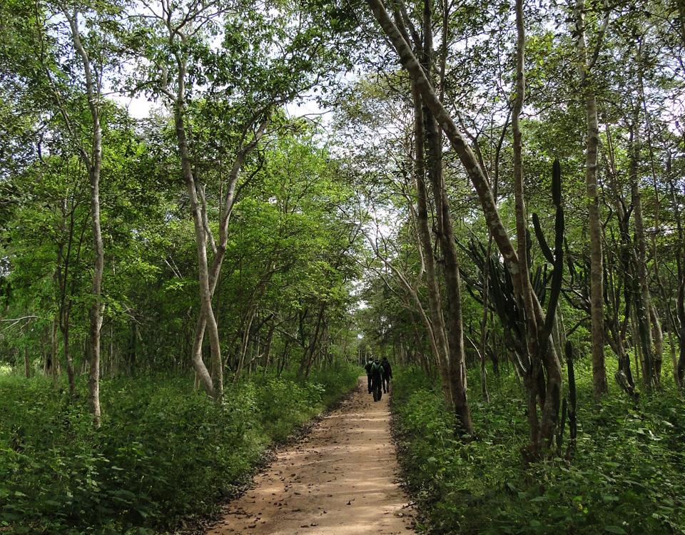 associacao-caatinga-Cadastro-Ambiental-Rural-–-CAR
