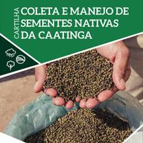 associacao-caatinga-coleta-sementes