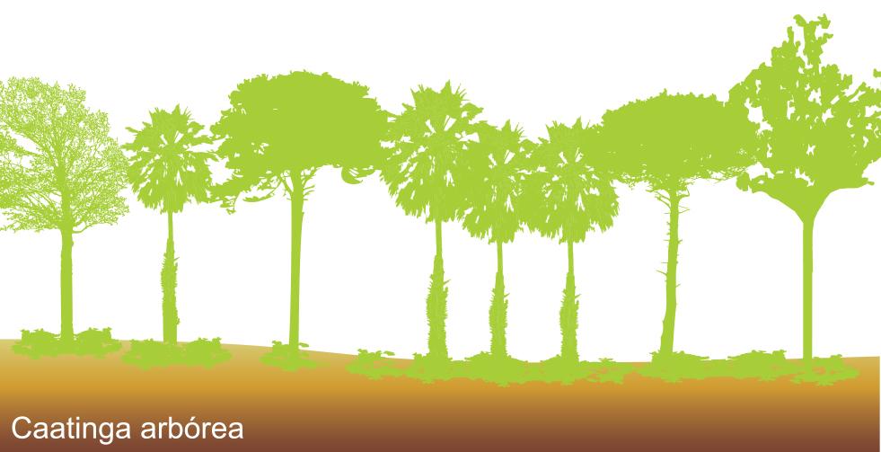 caatinga arborea
