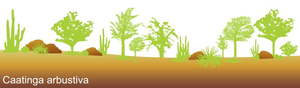 caatinga arbustiva