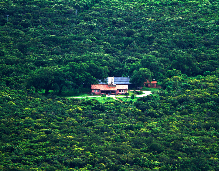 destaque biodiversidade caatinga