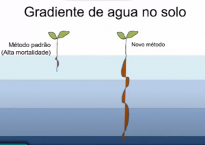 gislene_ganade_desertificação_ufrn_caatinga.png
