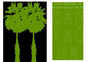 logo-boas-praticas-cadeia-produtiva-carnauba-associacao-caatinga